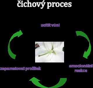Čichový proces